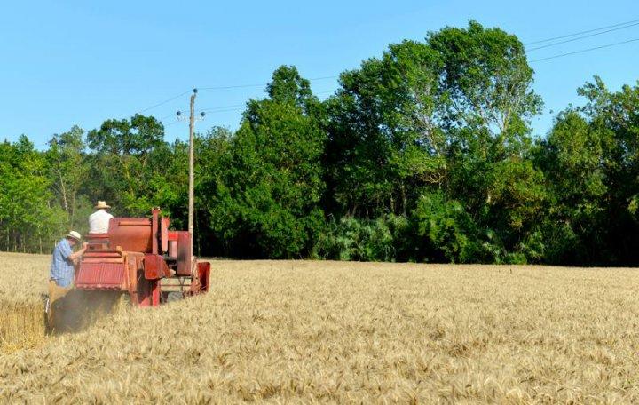 Prohibicions en la realització de tasques agrícoles