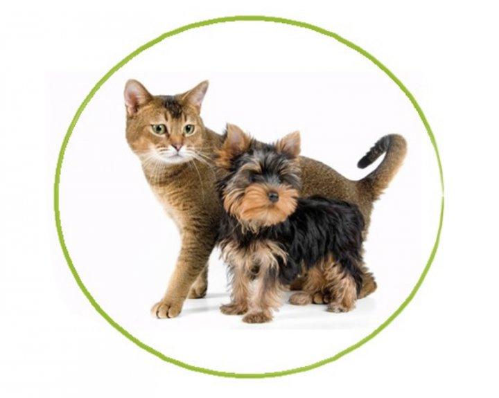 Nova campanya de tinença responsable d'animals