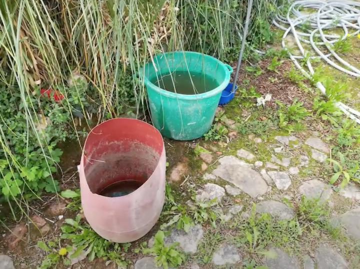 Consells per evitar la cria del mosquit tigre als horts