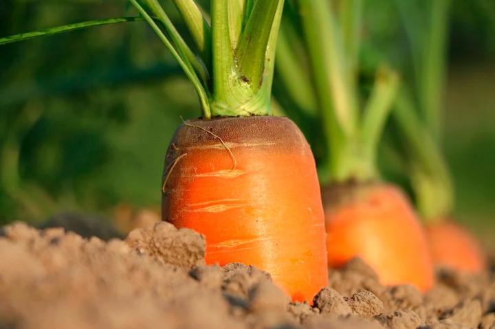 Ajuts de la Generalitat a productors agraris afectats per la crisi de la COVID-19