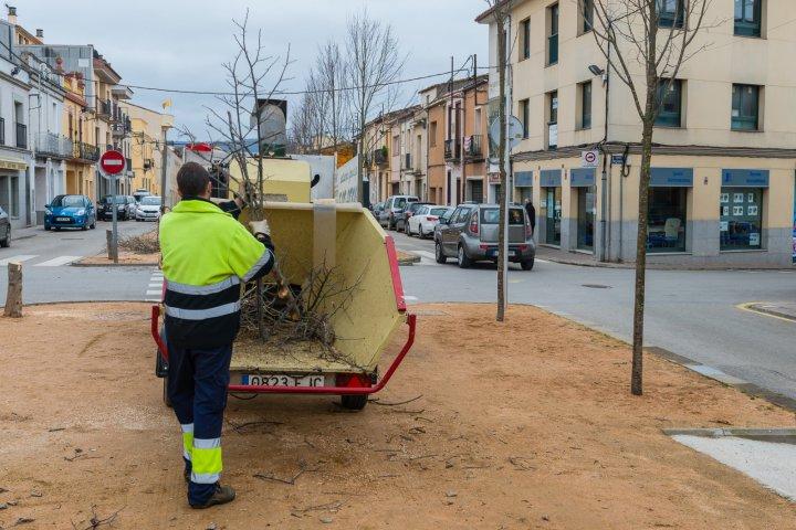 Treballs de retirada de l'arbrat vell al passeig Pompeu Fabra