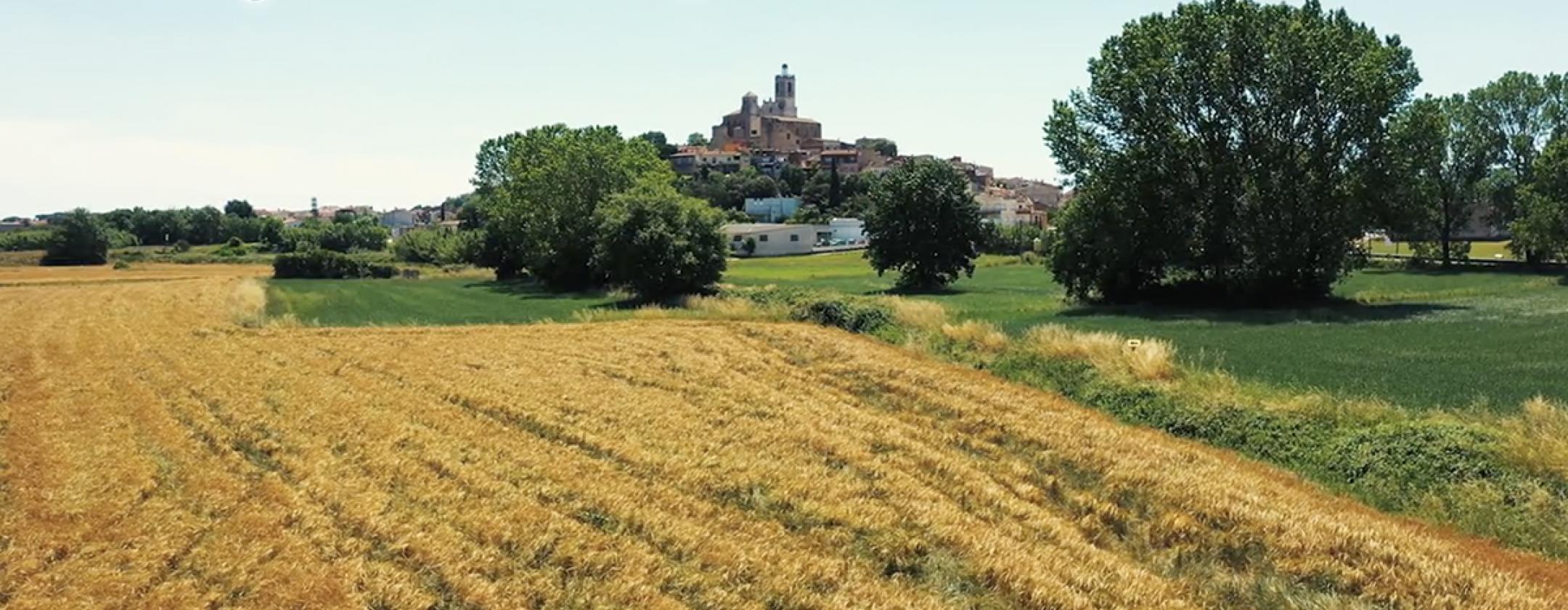 Documental Llagostera reptes de futur de la pagesia